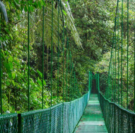 Neues aus Costa Rica