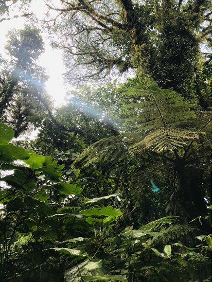 Gemeinsam für den Nebelwald Monteverde