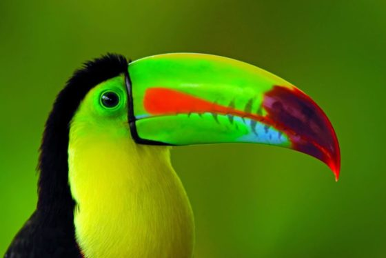 Un mois, un Parc National : La Cangreja