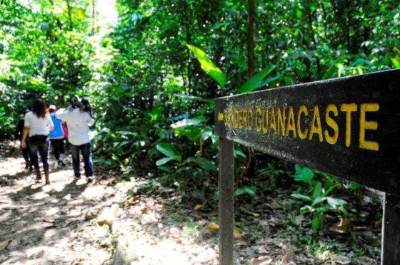 A la découverte du Guanacaste