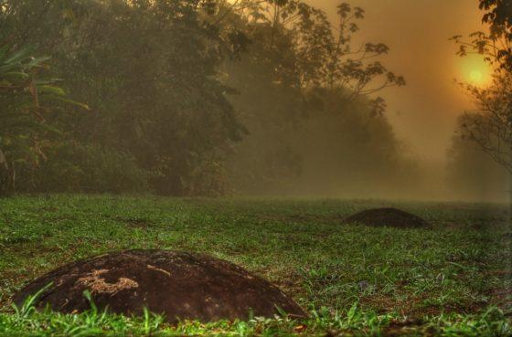5 activités culturelles à faire au Costa-Rica :