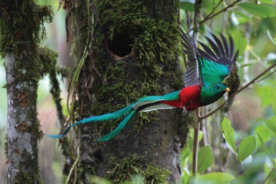 Un mois – un parc : Le Parc National Los Quetzales