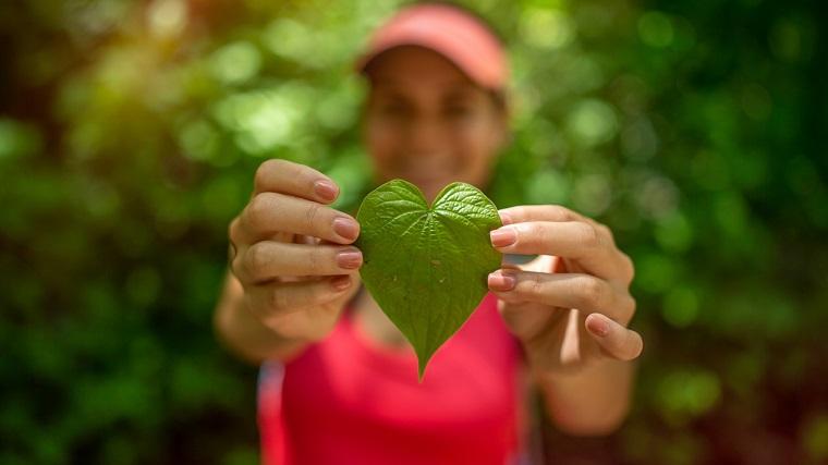 Bon à savoir > Les touristes pourront compenser l'empreinte carbone de leurs voyages et ainsi soutenir l'économie verte au Costa Rica