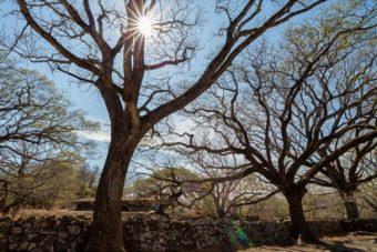 Un mois, un parc > Le Parc National Santa Rosa