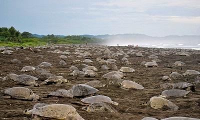 Six attractions touristiques incontournables à Santa Cruz et Nicoya