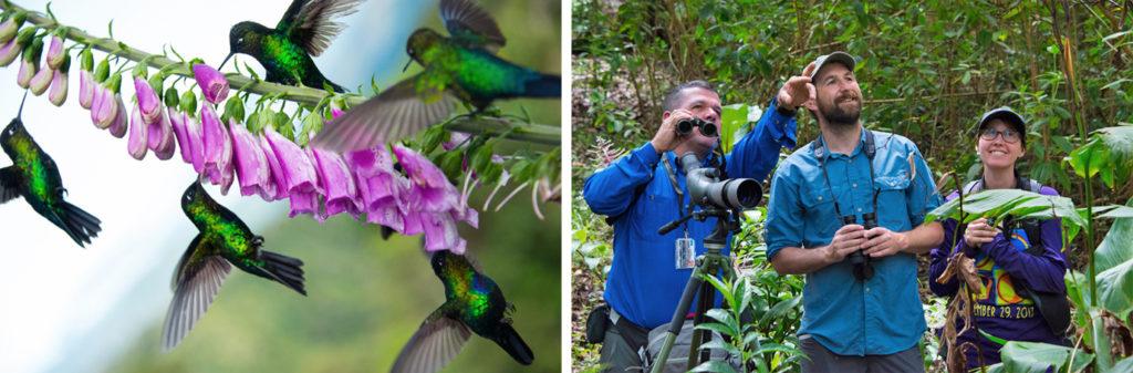 Observación de colibríes