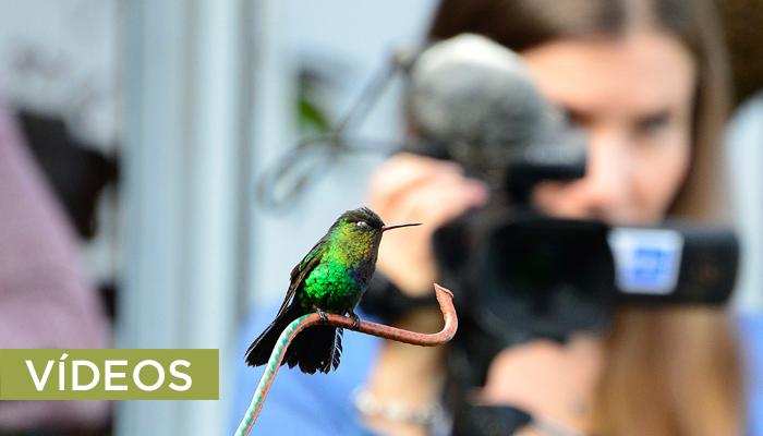 videos.Costa Rica