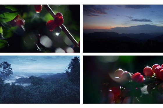 Costa Rica inspira el nuevo Blue Serum de Chanel