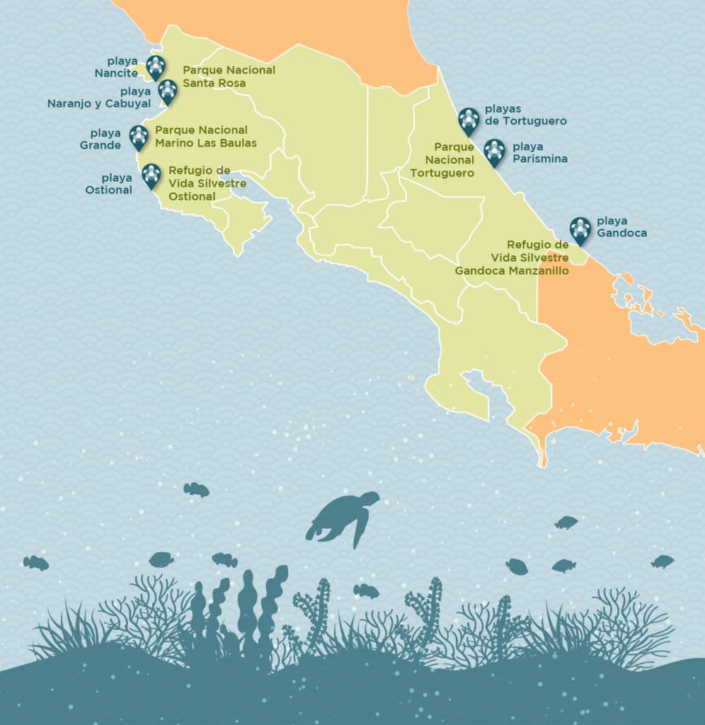 tortuga-costa-rica-b-01