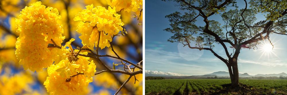 turismo-sostenible-costa-rica