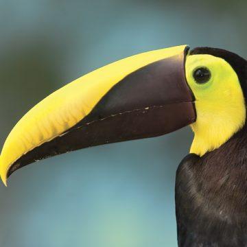 Webinar. Costa Rica, un destino sostenible con opciones únicas durante todo el año