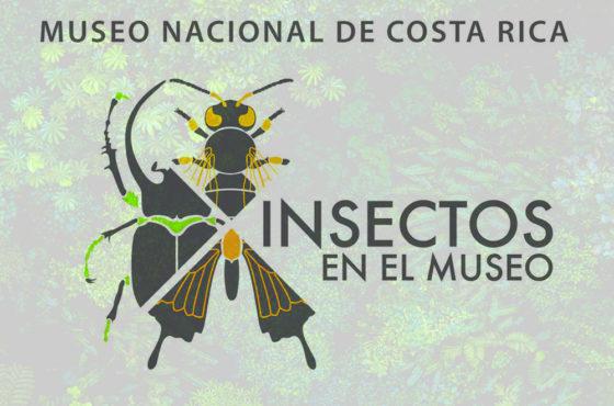 El Museo Nacional de Costa Rica exhibe los mejores ejemplares de su colección entomológica