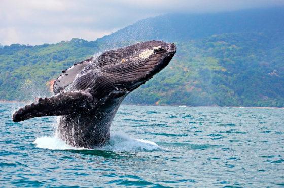 Costa Rica celebra la IX Edición del Festival de Ballenas y Delfines