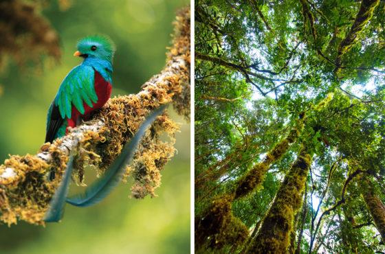La UNESCO declara Savegre nueva Reserva de la Biosfera