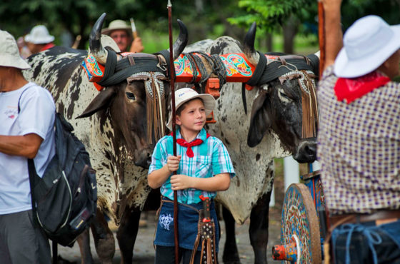 XXI Entrada de Santos y Desfile de Boyeros en San José. Manteniendo viva la tradición