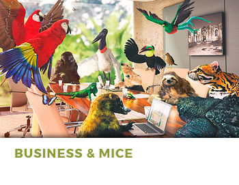 business mice costa rica