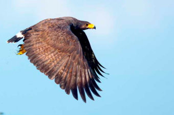 """Costa Rica, paraíso de la ornitología, presenta la """"Ruta de las Aves"""""""