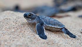 tortugas costa rica