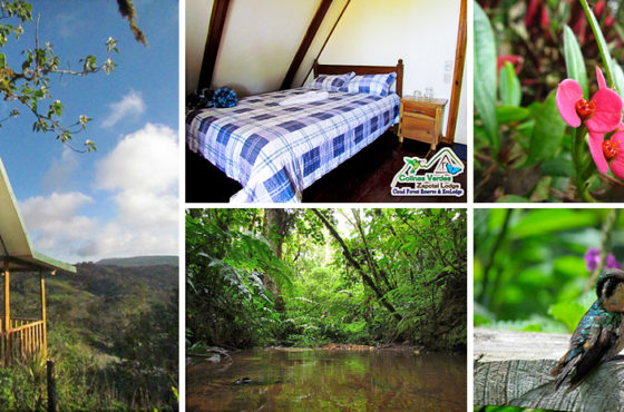 Colinas Verdes Zapotal Lodge. Zapotal – Cordillera Tilarán