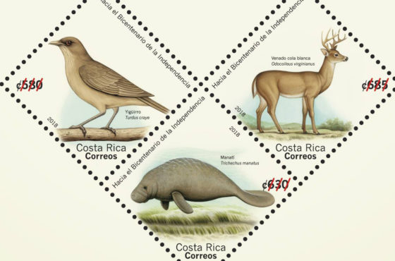 El yigüirro, el manatí y el venado cola blanca viajarán por Costa Rica y el mundo