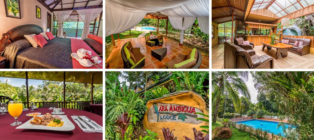 Rabatt am besten einkaufen online zu verkaufen Ara Ambigua Lodge. Heredia - Pura Vida University. Turismo ...