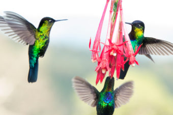 Webinar. Ruta de las Aves