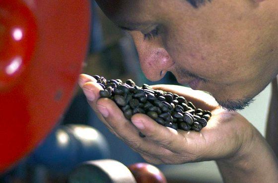 Tours de plantaciones de café