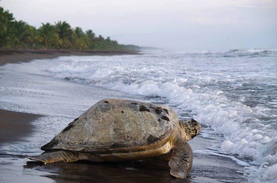 Las conexiones con Costa Rica se reactivan a tiempo para ver dos espectáculos naturales