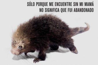 "Costa Rica Silvestre pone en marcha un proyecto denominado ""no me saques de mi hábitat"""
