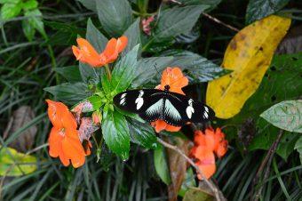 National Geographic coloca a Costa Rica como el mejor destino de turismo sostenible