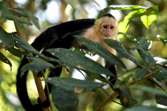 Sector eléctrico costarricense se une para proteger la fauna silvestre