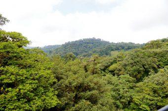 ¿Sabías que Monteverde es el lugar en el mundo donde hay más diversidad de orquídeas por metro cuadrado?